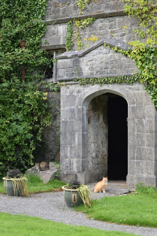 Markree Castle Cats © Lavender's Blue Stuart Blakley