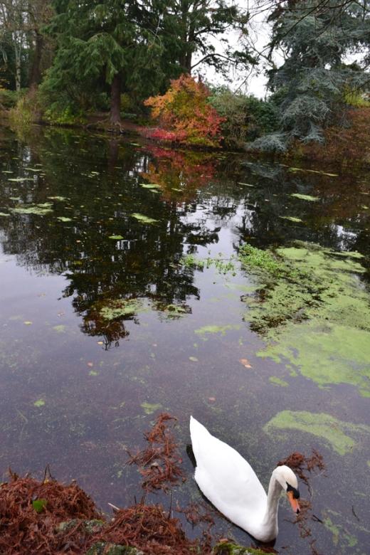 Altamont Gardens Lake © Lavender's Blue Stuart Blakley