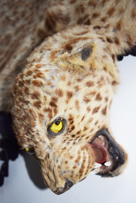 Huntington Castle Taxidermy © Lavender's Blue Stuart Blakley