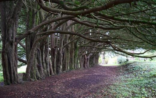 Huntington Castle Walk © Lavender's Blue Stuart Blakley