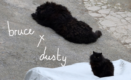 Castle Grove Ramelton Pets Bruce and Dusty © Lavender's Blue Stuart Blakley
