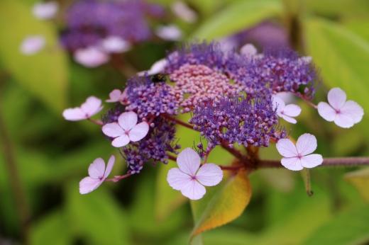 8 Salthill Gardens Donegal © Lavender's Blue Stuart Blakley
