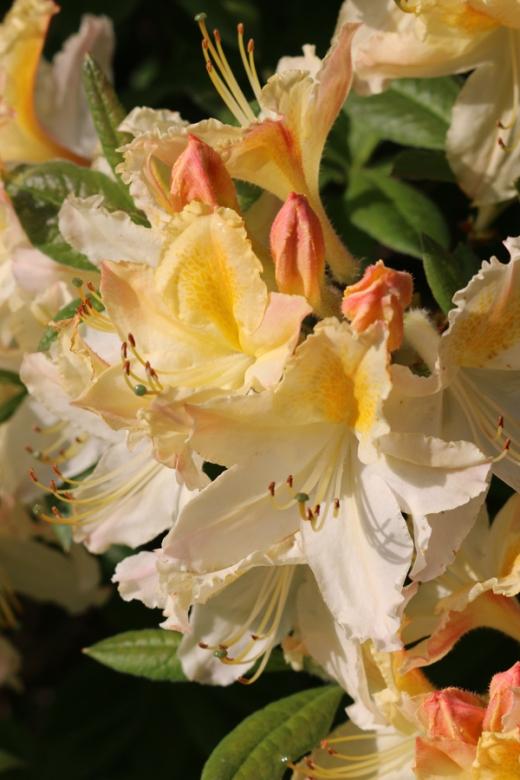Enniskeen Hotel Newcastle Flowers © Lavender's Blue Stuart Blakley