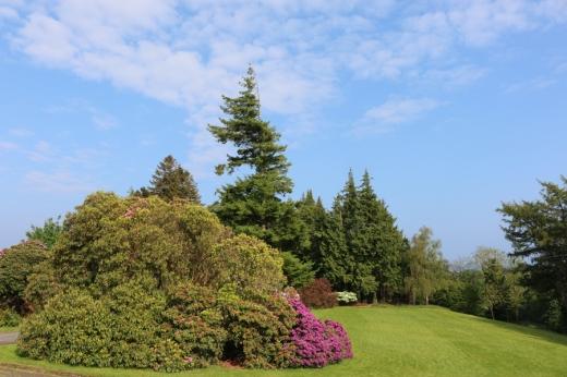 Enniskeen Hotel Newcastle Garden © Lavender's Blue Stuart Blakley