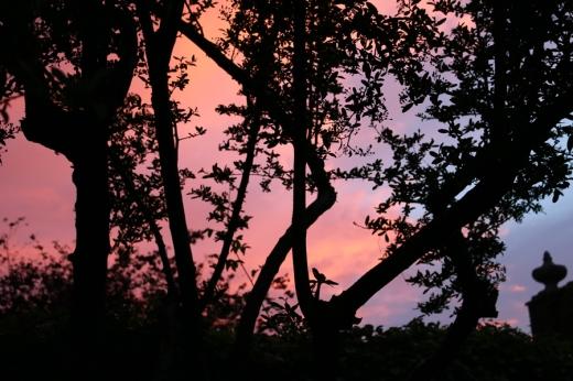 Ilchester Place Sunset © Lavender's Blue Stuart Blakley