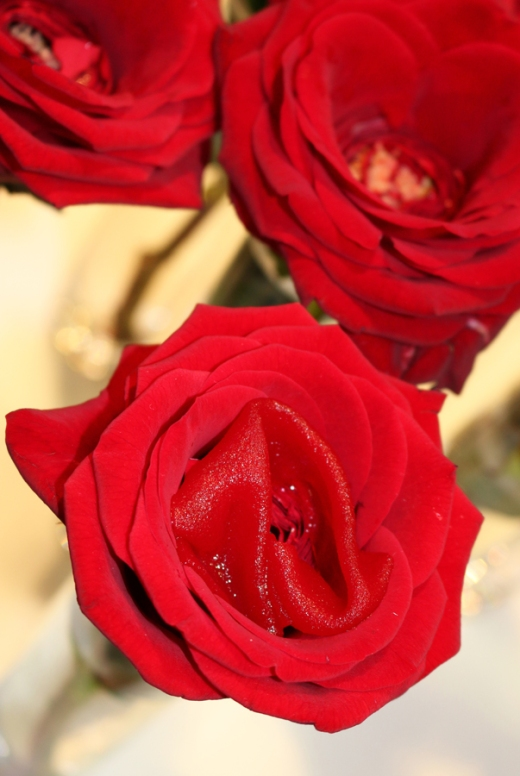 quique-dacosta-roses-lavenders-blue-stuart-blakley