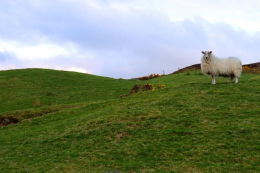 Barnes Gap Tyrone © Lavender's Blue Stuart Blakley