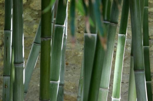 Bamboos La Divine Comedie Avignon © Lavender's Blue Stuart Blakley