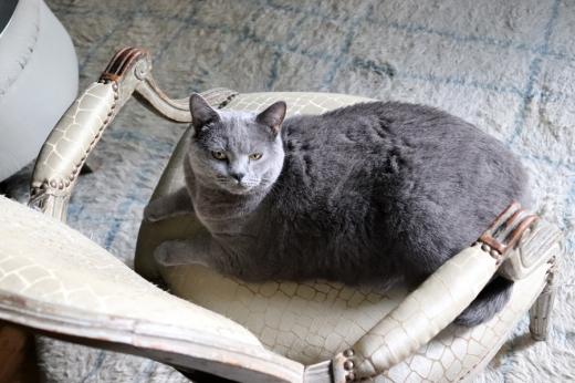 Cat La Divine Comedie Avignon Provence © Lavender's Blue Stuart Blakley
