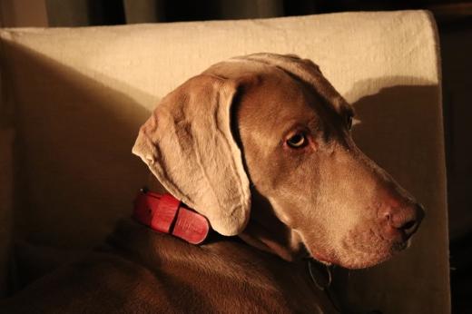 Dog La Divine Comedie Avignon © Lavender's Blue Stuart Blakley