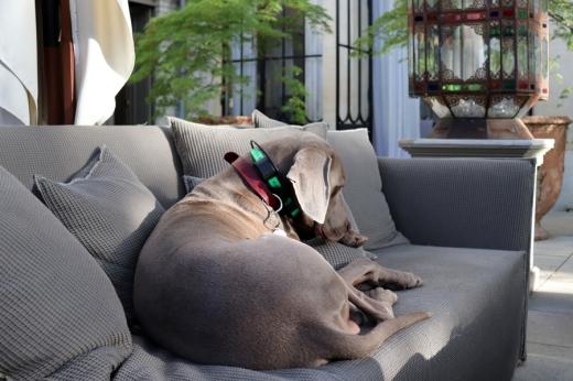Dog La Divine Comedie Hotel © Lavender's Blue Stuart Blakley