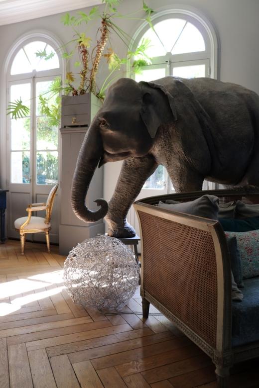 Elephant La Divine Comedie Avignon © Lavender's Blue Stuart Blakley
