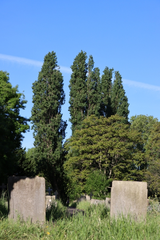 St Mary's Cemetery Battersea London Trees © Lavender's Blue Stuart Blakley
