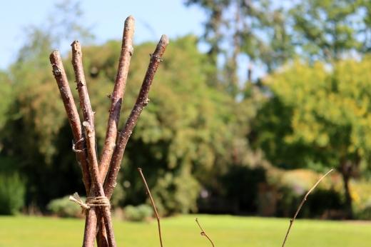 Branches Chelsea Physic Garden London © Lavender's Blue Stuart Blakley