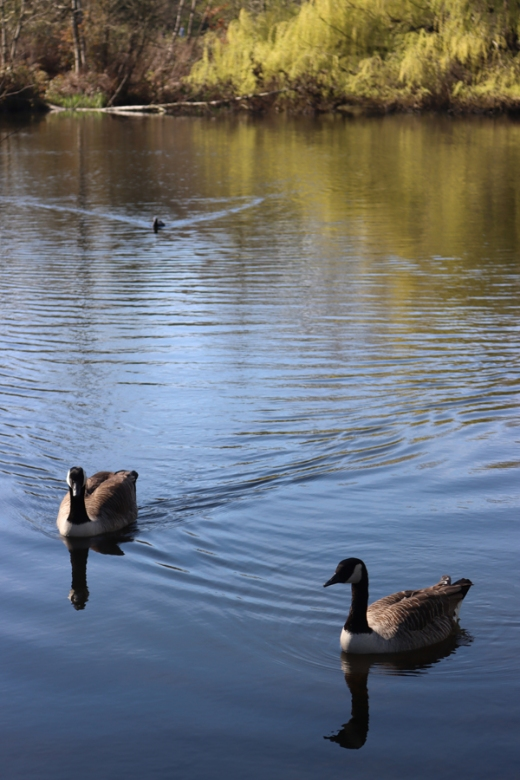 Wandsworth Common Pond © Lavender's Blue Stuart Blakley